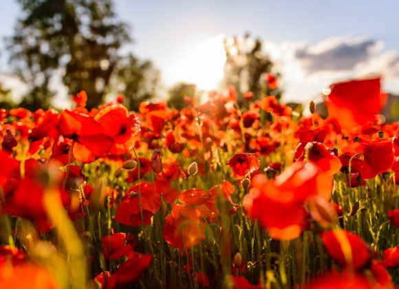 Remembrance Day | Rev. Nick Trussell